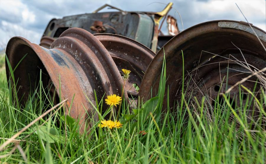 Abandoned Day Field Flower Flowering Plant Grass Green Color Growth Land Metal Mode Of Transportation Nature No People Obsolete Outdoors Plant Rusty Tire Transportation Wheel Yellow