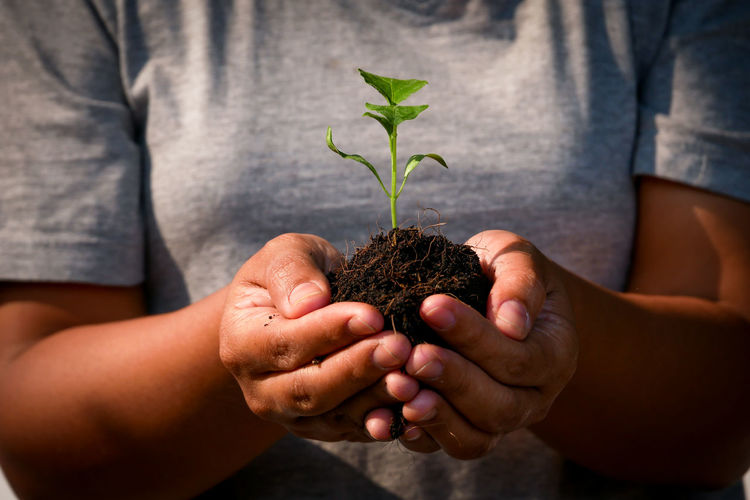 Human Hand Hand Holding Human Body Part Plant Leaf Plant Part Hands Cupped Nature Beginnings Care Growth People Dirt Close-up Men Environment Vulnerability  Seedling Midsection Gardening Outdoors Positive Emotion Planting Responsibility