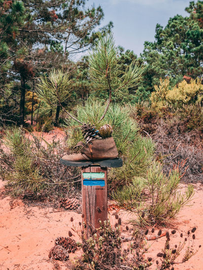 Growth Hiking Nature Nature Photography Path Plant Portugal Shoe Sunlight Travel Travel Photography Traveling Tree Beauty In Nature Cavaleiro Day Hikingadventures Nature_collection Naturelovers No People Outdoors Photography Sand Sky Travel Destinations