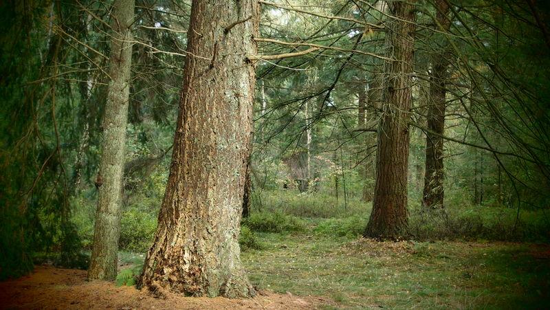 Autumn Forest Hogeveluwe Mystic Netherlands Tree Trees Wood