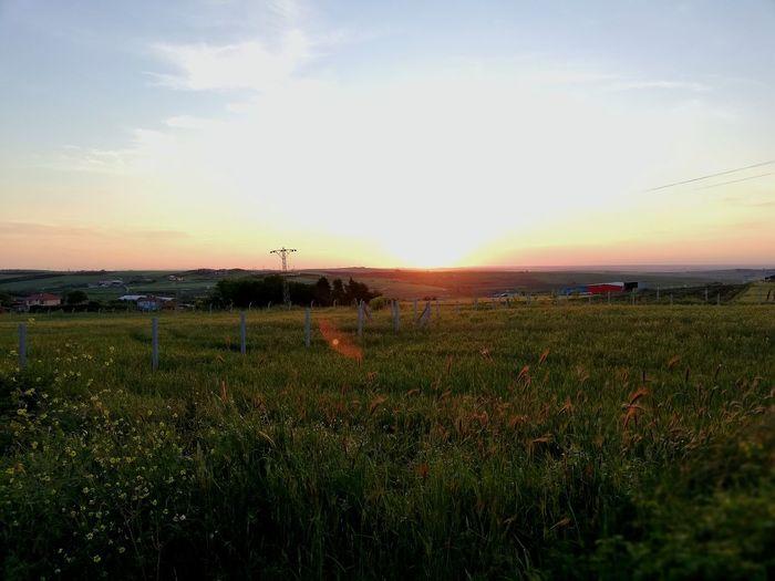 Water Irrigation Equipment Sunset Agriculture Rural Scene Field Sky Grass