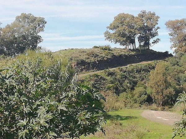 A hill Hill Sun Tree Sky Landscape Grass