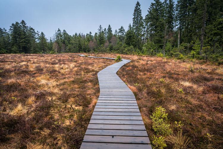 Boardwalk leading towards forest
