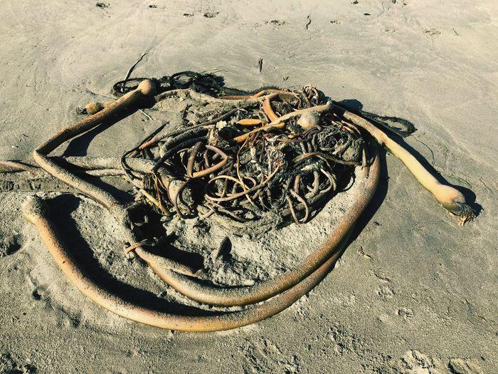 Tangled Kelp