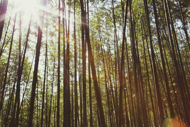 EOS 6D EF 24-105mm Landscape Bamboo Nature Damyang Juknokwon