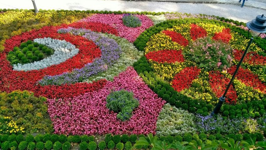 Red Multi Colored No People Grass Outdoors Day Flowers Garden
