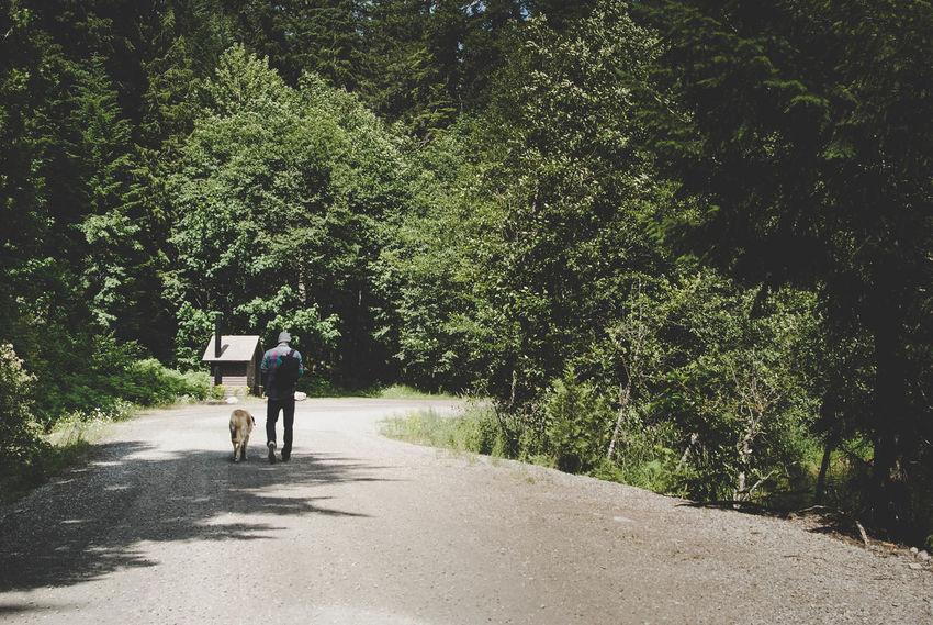 Photography Evanscsmith Photographerinlasvegas Dog❤ Full Length Men Road Rear View Walking Senior Adult Focus On Shadow Countryside Lakeside Greenery Green Pathway Treelined vanishing point The Great Outdoors - 2018 EyeEm Awards