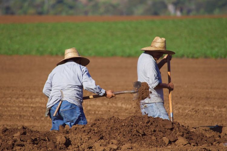 Agriculture Land Working Digging Farming Hard Labor Hot Sun Job Labor Men Occupation