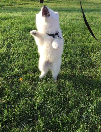 Roar! Jumpshot Dog Best Pet Owners Ever Playtime