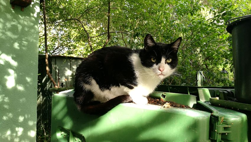 Cat Lovers Our Cat EyeEm Cats Garden Photography I Love My Cat Sunlight And Shadow Black And White Looking At Camera Relaxing Sunlit Pet Pet Photography  Cute Pets Always Be Cozy Cat Domestic Animals Animal Themes