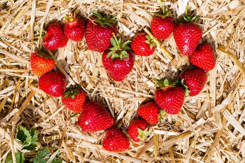 Heart shape made from fresh picked strawberries on straw, top view Abstract Close-up Concept Design Directly Above Food Freshness Friendship Healthy Eating Heart Heart Shape Holiday In Love Lifestyle Love Red Red Share Food Share Love Straw Strawberries Summer Sun Top View Valentine's Day