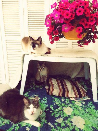 Cats Animals First Eyeem Photo