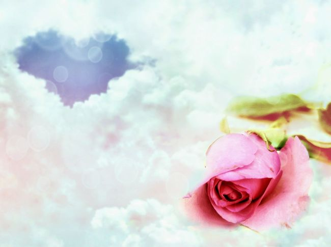 soft focus of pink rose and blurred blue heart shape in many white clouds with bokeh and lighting decorations background on love concept, double exposure Love Concept Heart Shape Blue Clouds Cumulus Cumulonimbus Stratocumulus Bokeh Art Decoration Outdoor Softly Focus Blur Background Valentine Card Colorful Delicate Petal Flower Pink Color Rose - Flower Close-up Sky Double Exposure Petal Pollen Pink Single Flower Multiple Exposure