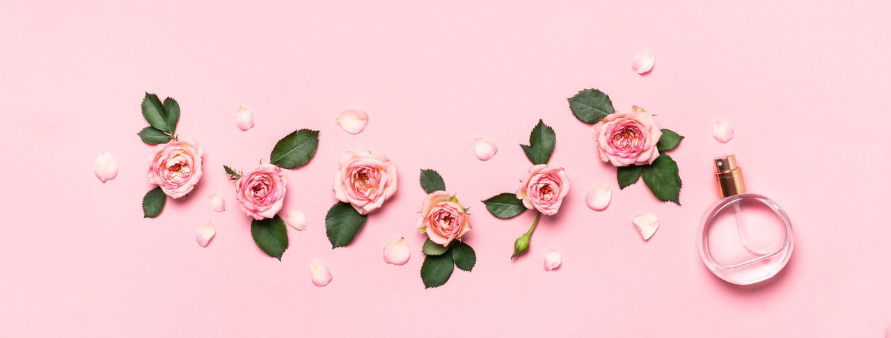 High angle view of pink roses against white background