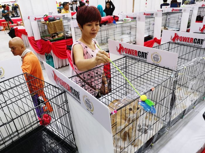 Playing with cat Playing Cat Life Hairy  Color Cage Attraction People Choosing Standing