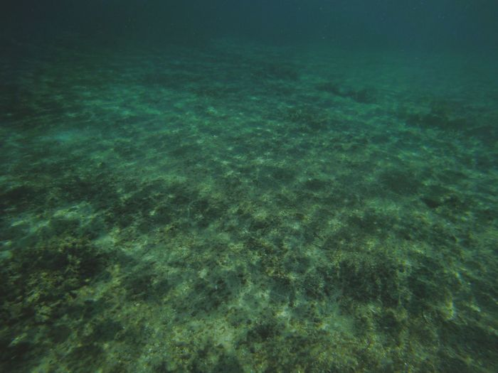 Nature Beauty In Nature No People Green Color Underwater Outdoors