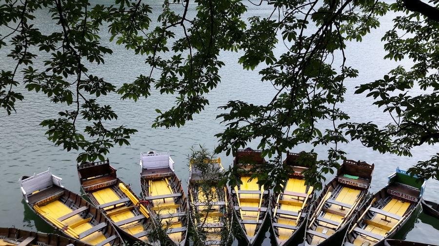 NainiLake Nainital India Lake Boats⛵️ Tranquility Gorgeousview Branches Water Surface Water First Eyeem Photo