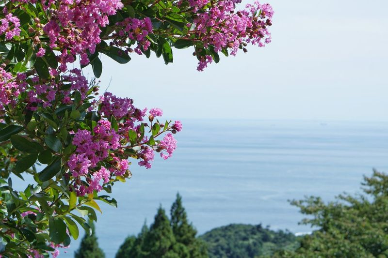 Horizon Over Water Seascape Scenery Plant Flower Growth Tree Nature Scenics - Nature Freshness Sea Focus On Foreground Outdoors Tranquility No People