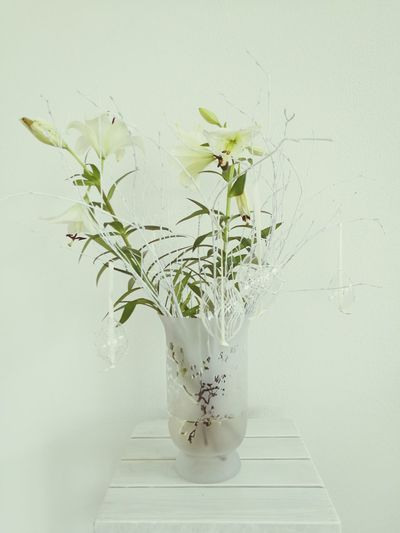 Easter Vase Indoors  Plant No People Flower Close-up Nature White Background Easter Egg White Flower White Color Cream Color Osterblumen Ostern Ostern 🐣