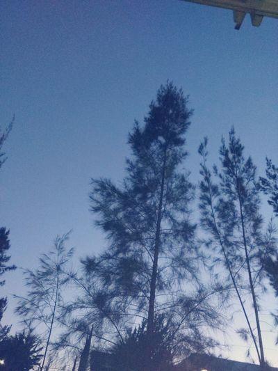 El fracaso el mejor maestro es Sky Blue Nature Forest Clear Sky