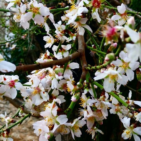 Growth Nature White Color Tree Branch Beauty In Nature Springtime Twig Blossom No People Flower Close-up Outdoors Freshness Day Fragility Backgrounds Flower Head Domestic Animals