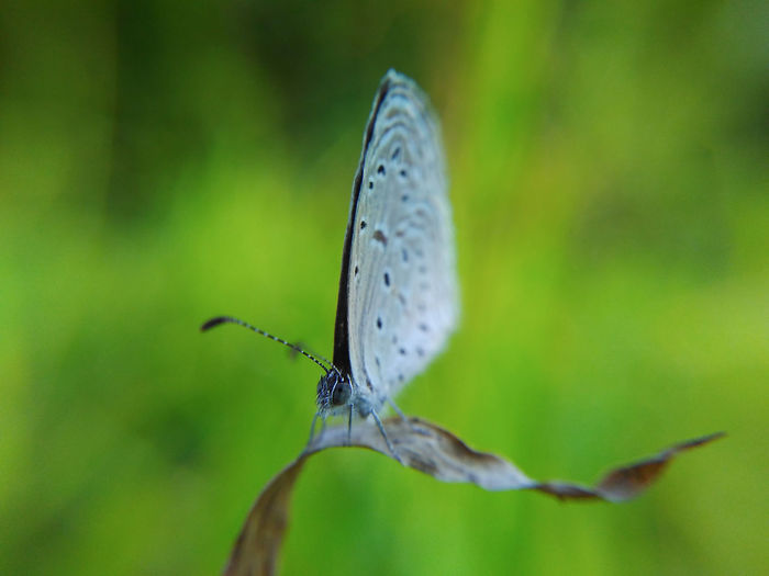 Macro Butterfly Insect Nature Close-up Beauty In Nature Narrow Depth Of Field Mobilephotography