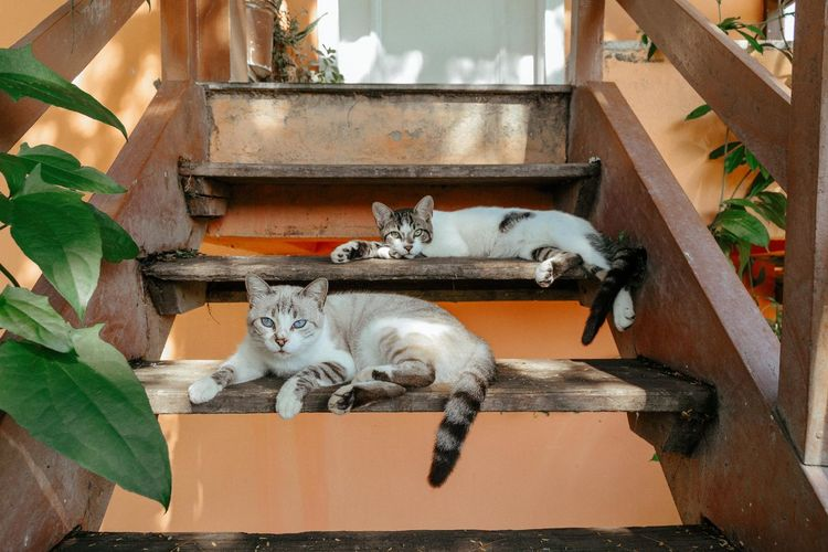 Praia das Caravelas Mammal Domestic Animal Themes Animal Cat Pets Feline Domestic Animals Domestic Cat Vertebrate One Animal No People Relaxation Portrait Looking At Camera Plant Part Architecture Leaf High Angle View Resting Whisker