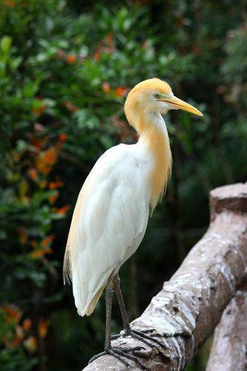 Bird Beak Perching Droppings