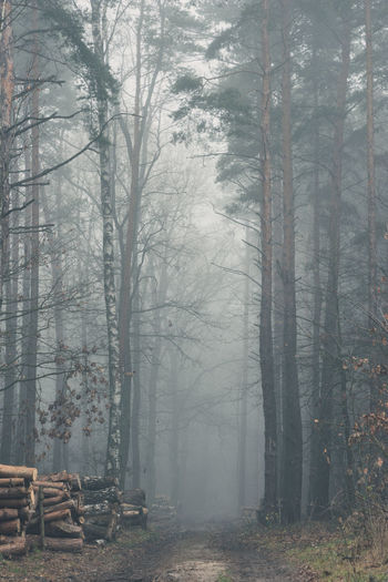 Piles of cut trees along a road disappearing in a mist shrouded forest Bare Tree Beauty In Nature Branch Day Fog Forest Forest Fire Nature No People Outdoors Silence Snowing Timber Tranquility Tree Tree Area Tree Trunk Winter