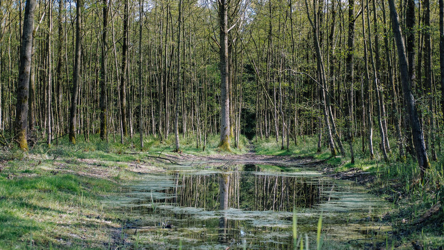 View of swamp in forest