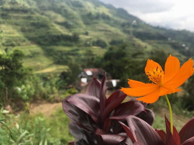 Breathe Plant Flower Flowering Plant Beauty In Nature Fragility Vulnerability  Freshness