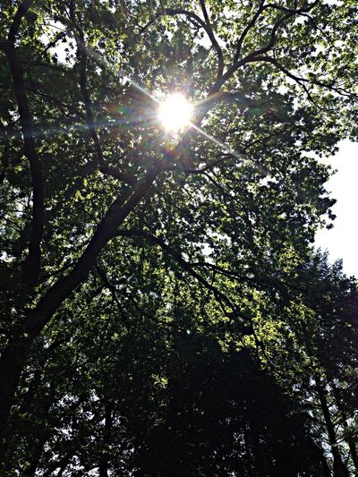 Enjoying The Sun Relaxing Hugging A Tree Instagood #good morning ???