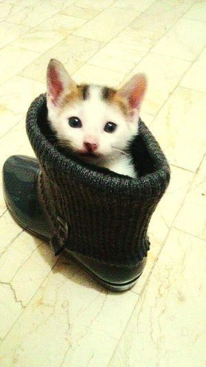 Meet applejuice! Kittens