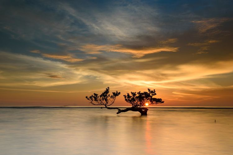 Calm Sunset Anyer  INDONESIA Pantai Anyer Serang Beauty In Nature Carita Cloud - Sky Day Horizon Over Water Idyllic Nature No People Outdoors Palm Tree Reflection Scenics Sea Silhouette Sky Sunset Tranquil Scene Tranquility Tree Water Waterfront
