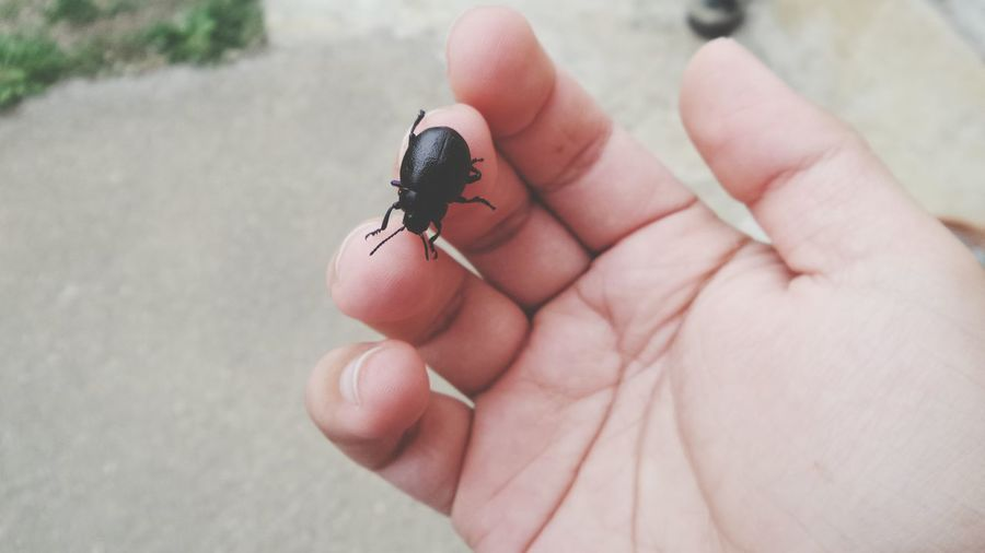 Cropped hand with black insect