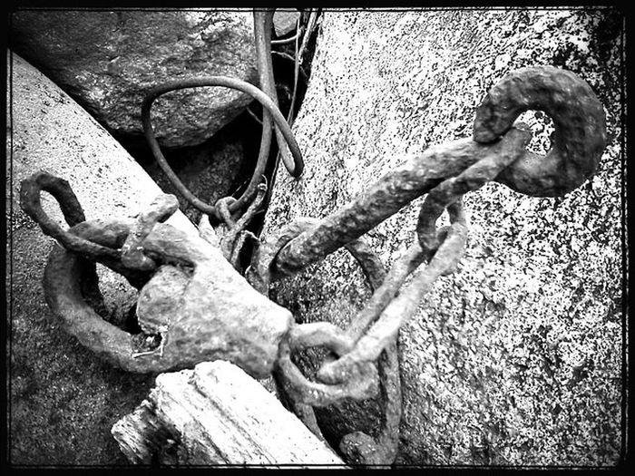 Black & White Rurex In Rust, We Trust