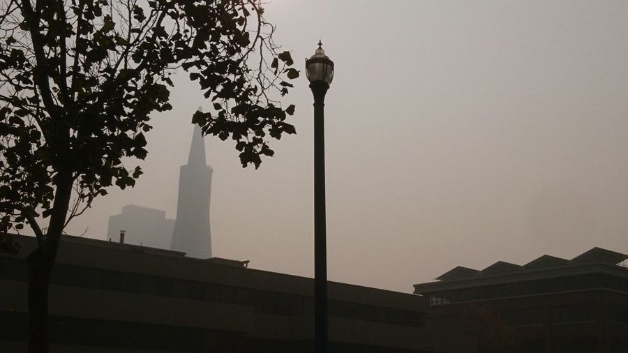 Lamp post in the haze. Transamerica Pyramid San Francisco SF California CA United States USA Embarcadero Haze Hazy  California Wildfires Foggy Lamp Lamp Post Lamppost Sky Skyline Urban Dystopia Mystery City Tree History Architecture Sky Built Structure