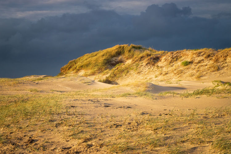 Scenic view of north sea dunes against sky