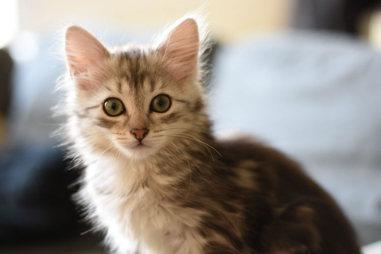 Kitty cat <3 Animal Animal Themes Backlight Cats Check This Out Close-up Cute Cute Pets Day Domestic Animals Domestic Cat Feline Indoors  Kitty Kitty Cat Landscape Love Mammal Natural Light No People Pet Pets S