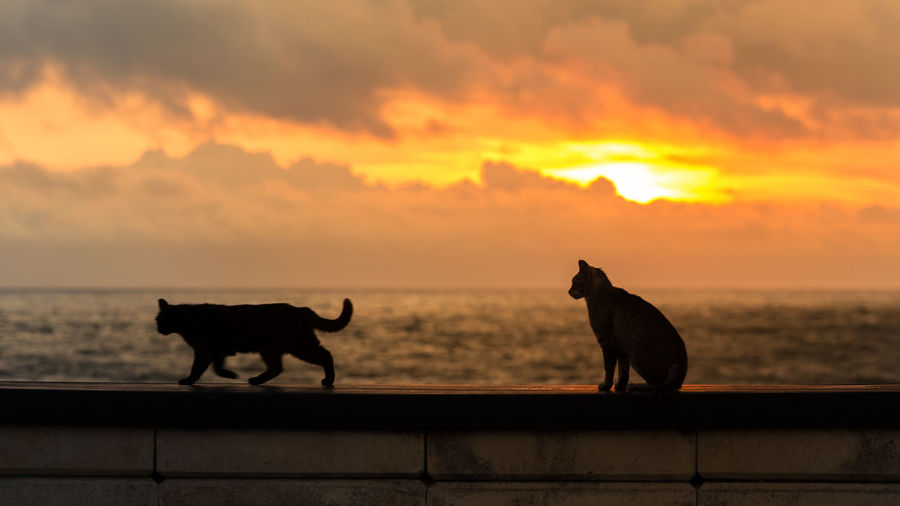 Two dogs on sea against sky during sunset