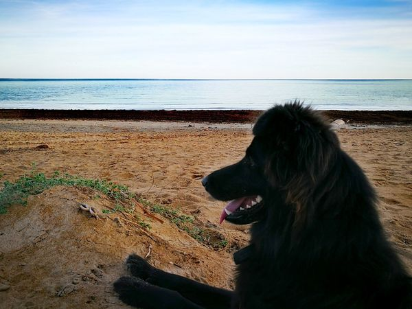 Dog Pets One Animal Sea Animal Themes Domestic Animals Horizon Over Water Beach Mammal No People Outdoors Nature Sky Day Finding New Frontiers