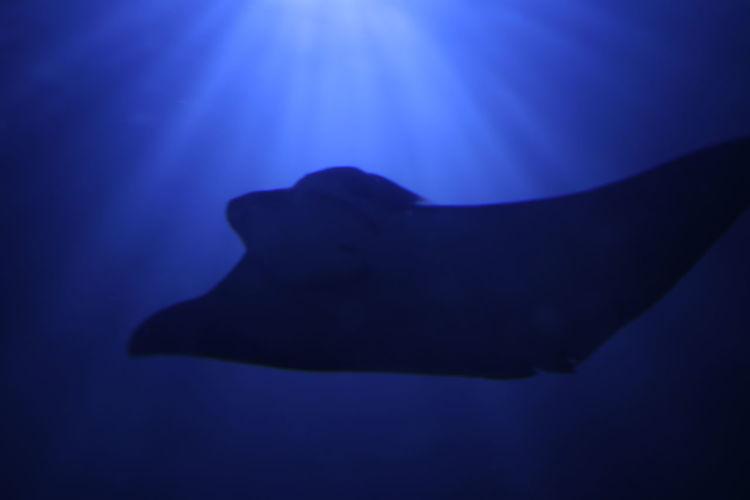 Close-up of silhouette fish swimming in aquarium
