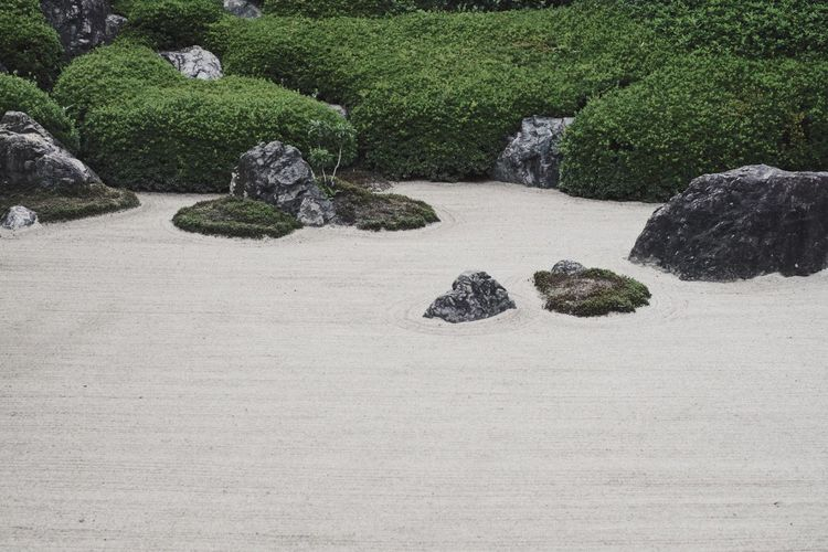 Nature Japanese  Vscocam Light And Shadow Streetphotography Snap Rock Plant Solid No People Rock - Object Tree Nature