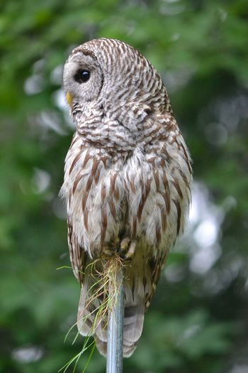 Close-up of owl perching on plant