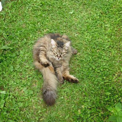 2011 year Instagramcats Catsagram Cat Catoftheday Cats 2014 Gato кот 貓 Instacats Katzen кошки котэ 고양이 Caturday Katt Kedi Kot 猫 We_love_cats Chat Kass Kissa Katz Kucing Kočka Macka кішка Catsofinstagram