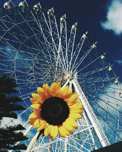 Top Popular Photo Ferriswheelinthecity🎡🎢 Ferris Wheel Sun Flower Travel Photography Travel Destinations Travel Travelphotography Traveldiaries Summer Relaxing Check This Out VSCO Passionforphotography Passionpassport Nostalgic
