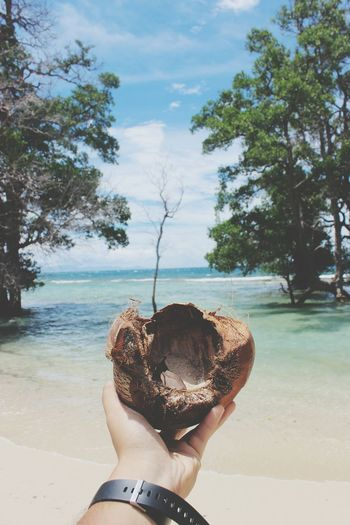 Cropped hand of man holding coconut against sea