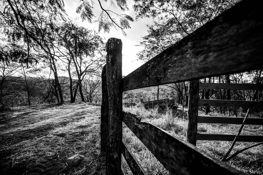 Nature views in B&W Wood - Material Tree Day Plant Nature Railing Architecture No People Built Structure Barrier Fence Boundary Outdoors Sunlight Sky Security Protection Safety Land
