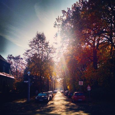 Let the Sunshine in... Autumn Berlin Deutschland Germany Ig_deutschland Ig_germany Ig_europe Insta_international Insta_europe Igs_world