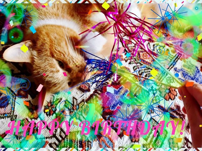 Cat Photography 3XSPUnity Multi Colored Celebration Happy Birthday! Happy Birthday To Me ♥  The Cat Condition Cat Power The Week On EyeEm Cat Portrait Catlifestyle Card Design Lifestyles Creativity Bright Kreativität Made By Me From My Eyes To Yours Card Of Sympathy Happy Birthday Birthday Celebration! Birthday Card Celebrating Day Of Birth Celebrate The Little Things In Life Card Making